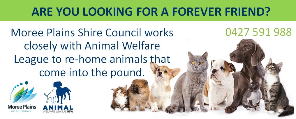 Animal Welfare Pound