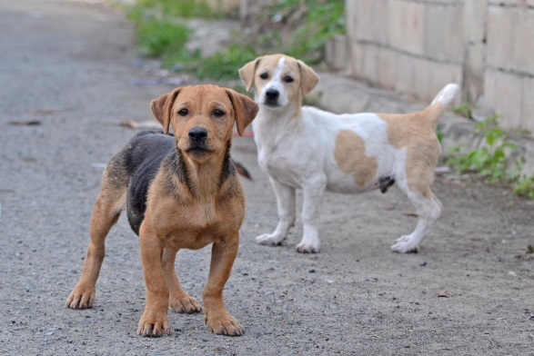 Council's campaign will begin with catching roaming dogs and taking them to the pound followed by door-to-door audits of households to check their pet registrations and microchip status.