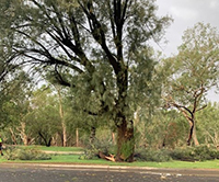 Tree damage Moree Shire