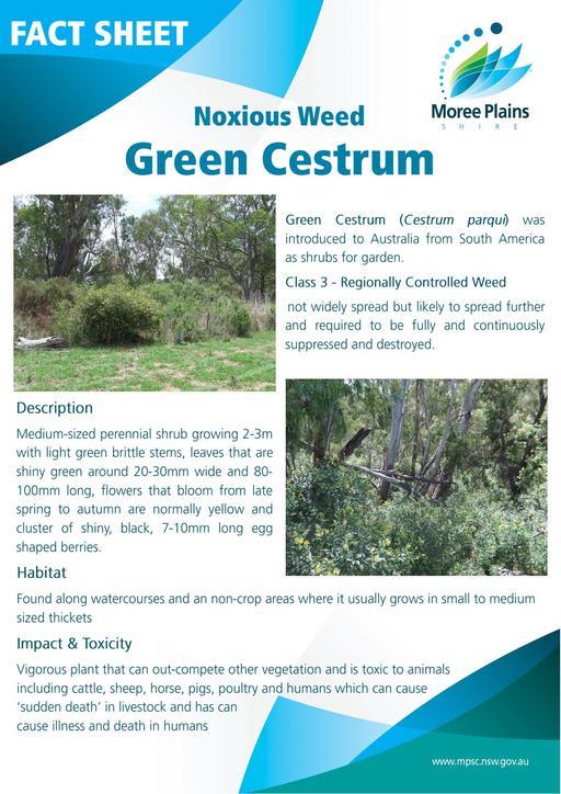 Fact Sheet   Green Cestrum